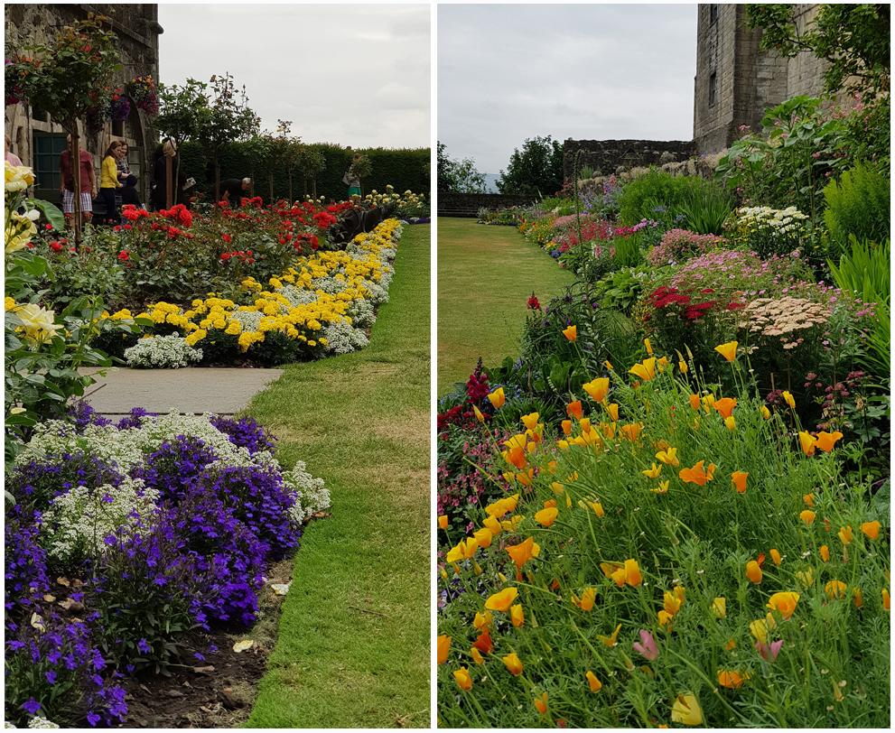 two portrait images of flower beds in bloom