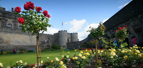 garden with roses growing and castle in background